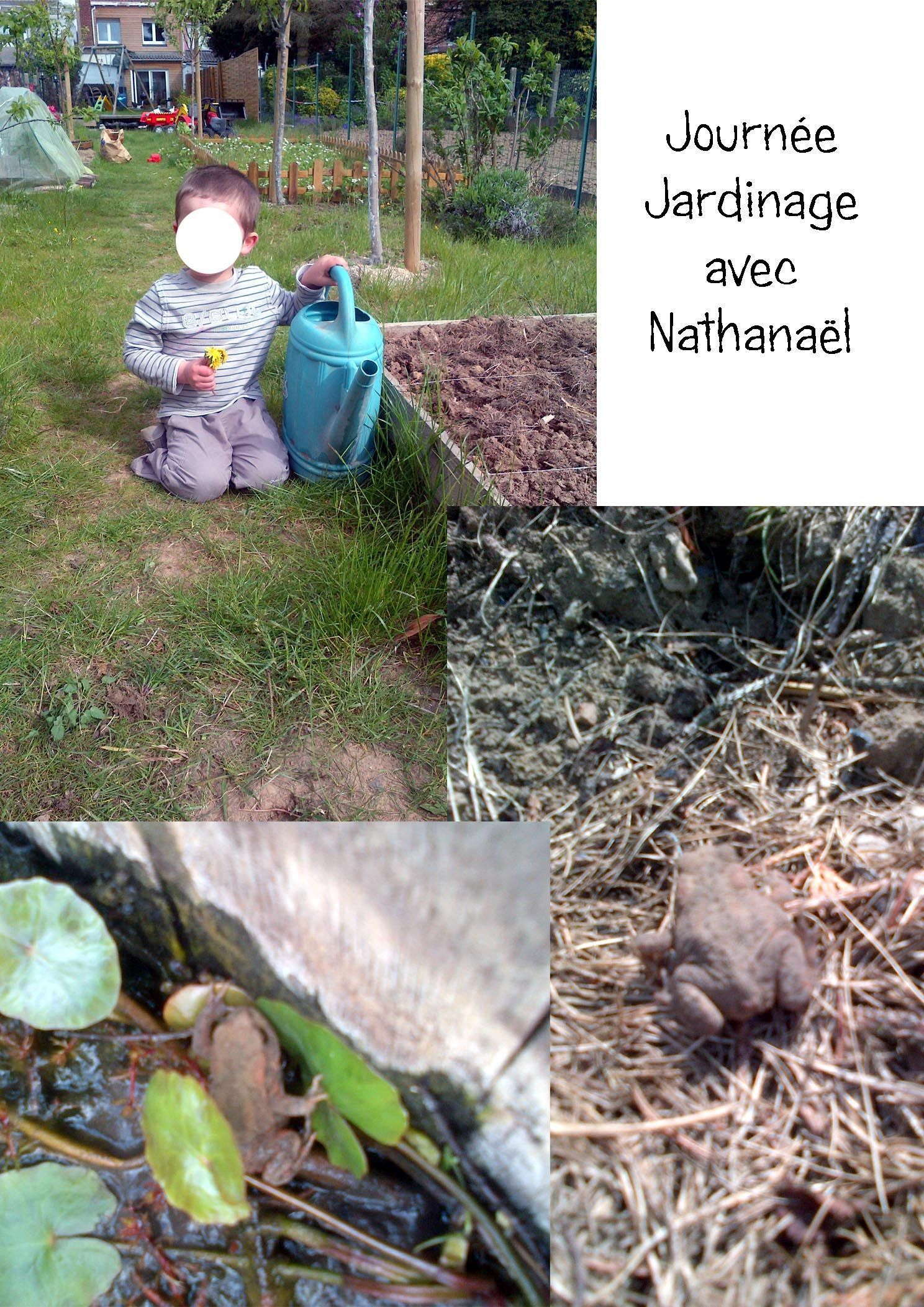 Jardinage - Invasion d araignee dans le jardin ...